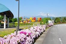 平成29年立山町総合公園のツツジ